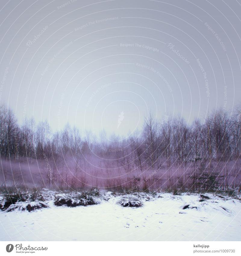 the fog Natur Pflanze Baum Landschaft Tier Winter Wald Umwelt rosa Schneefall Nebel Abgas Umweltverschmutzung Gift Smog Nebelbank