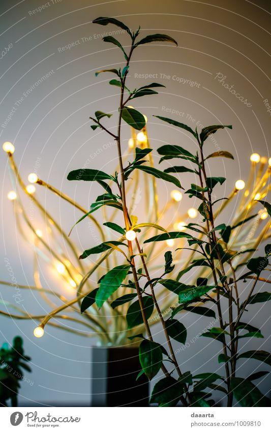 Stadt Pflanze schön Erholung Freude Leben Stil Lifestyle Feste & Feiern Freiheit Stimmung Design wild Freizeit & Hobby Dekoration & Verzierung elegant