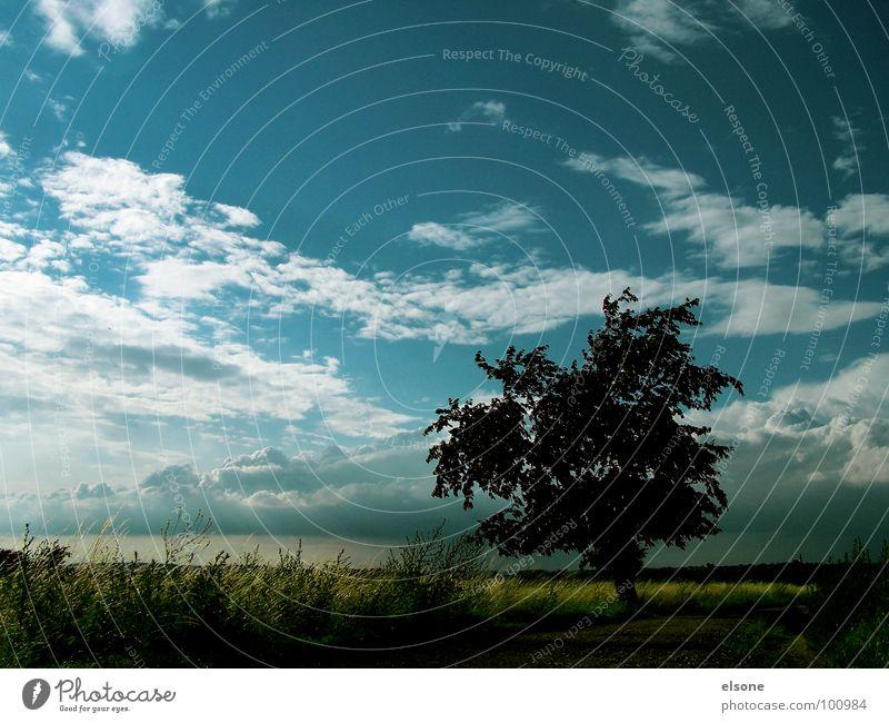 Kirschbauromanzen Natur schön Baum blau Sommer ruhig Wolken Einsamkeit Stimmung Feld Dresden Sturm Idylle Gewitter traumhaft Kirschbaum