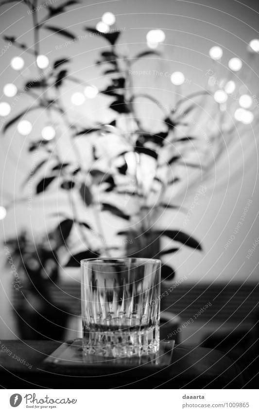 Pflanze Weihnachten & Advent Freude Stil Lifestyle Feste & Feiern Freiheit Lampe Wohnung wild Freizeit & Hobby Fröhlichkeit verrückt Getränk Abenteuer