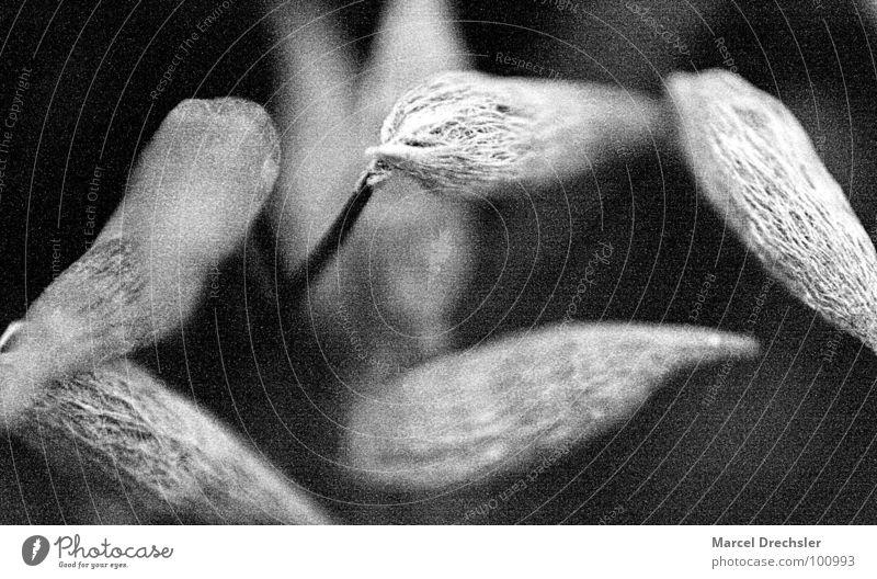 Mikromakro Natur weiß Pflanze schwarz Berge u. Gebirge grau klein Samen Mikrofon arrangiert winzig Sporen mikroskopisch