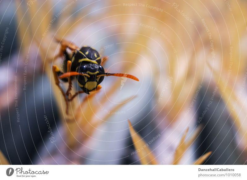 Stachelwald I Natur Pflanze Tier schwarz gelb klein außergewöhnlich Angst elegant sitzen gefährlich beobachten bedrohlich Insekt krabbeln stachelig