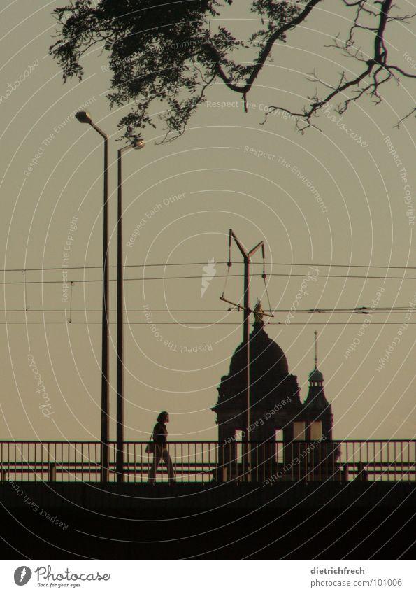 vernetzt versetzt Mensch Natur Himmel Baum Ferien & Urlaub & Reisen schwarz Straße Farbe dunkel oben Fenster Linie hell wandern laufen gold