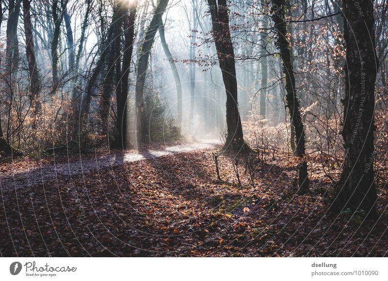 Morgens... Natur blau Pflanze grün Baum rot Landschaft ruhig Winter Wald kalt Umwelt Herbst Wege & Pfade natürlich grau