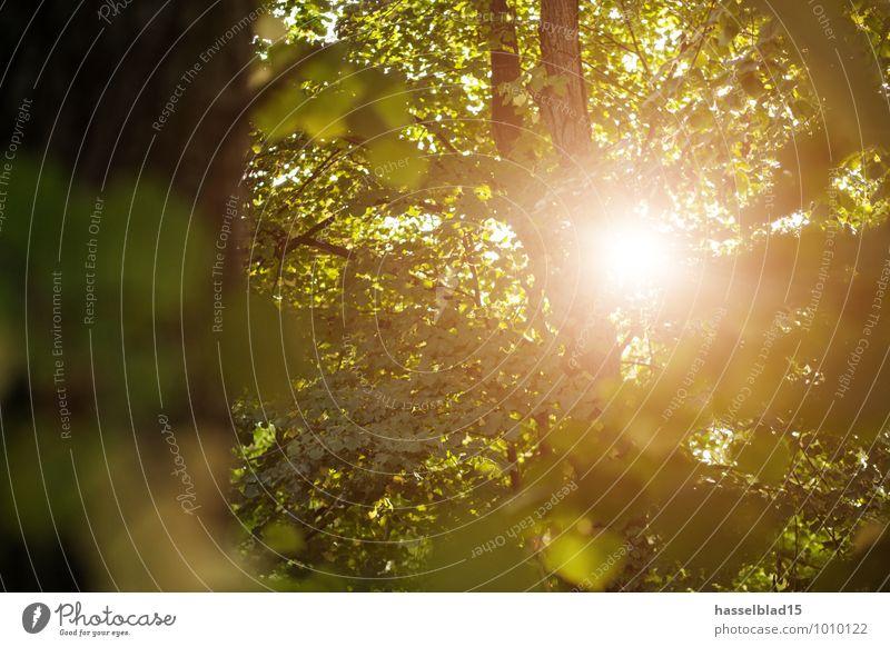 sun tree Ferien & Urlaub & Reisen Sommer Baum Erholung Blatt ruhig Wald Leben Gesundheit Freiheit Zufriedenheit Ausflug Fitness Abenteuer Wellness Fahrradtour