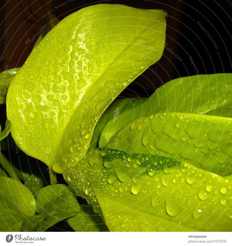 tri tra tropfner vol. 2 grün Quadrat nass feucht Flüssigkeit nah dunkel harmonisch Botanik Pastellton Licht Frühling Lichtbrechung Physik Makroaufnahme