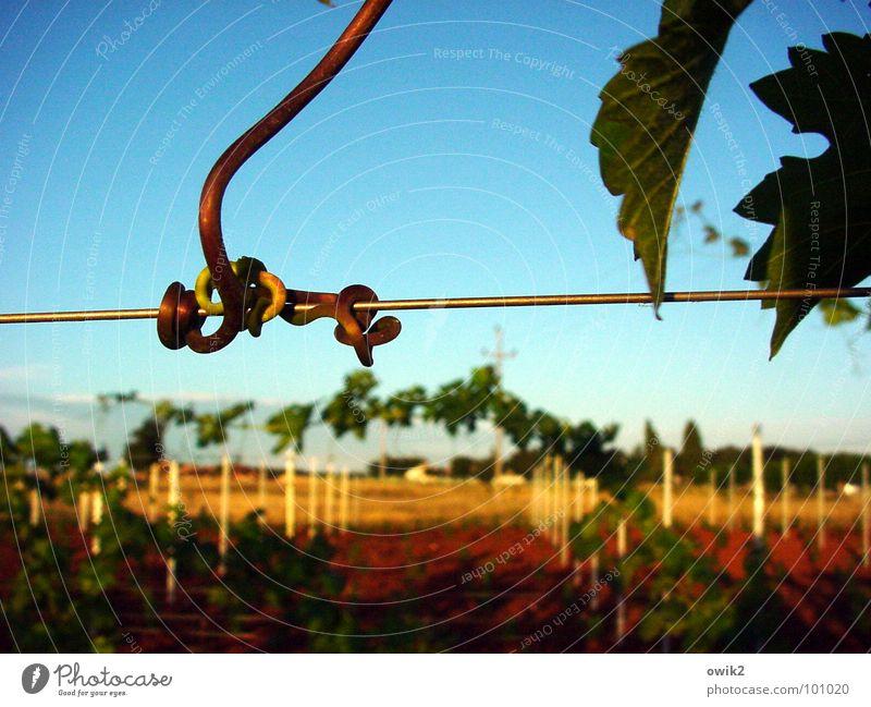 Haltestelle Natur Landschaft Himmel Istrien Südeuropa hängen dünn fest Zusammensein natürlich blau gelb grün rot Wein Ranke Weinberg Weinbau Knoten haltend
