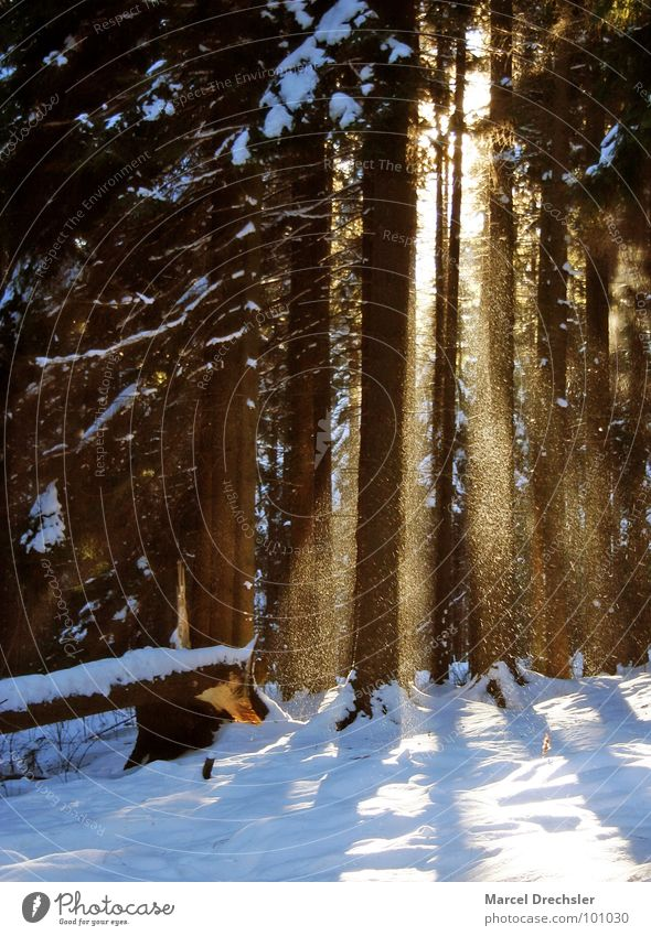 Winterwald Baum Sonne Winter ruhig Einsamkeit Wald kalt Schnee Frost Baumstamm Waldlichtung Flocke rieseln Erzgebirge