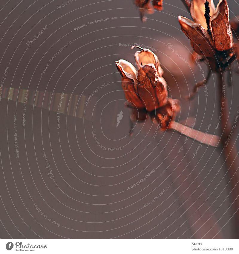 warmes Licht im Herbstwald besonderes Licht schönes Licht Lichtstimmung Lichtreflexe warme Farbe herbstlich Herbstgefühle Lichteinfall Lichteffekt lichtvoll