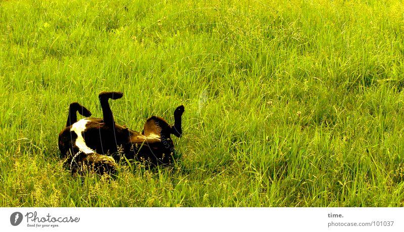 Performing Wellness Farbfoto Außenaufnahme Tag Freude Wohlgefühl Freizeit & Hobby Garten Rücken Bauch Beine Gras Park Wiese Verkehrswege Hund Pfote Bewegung