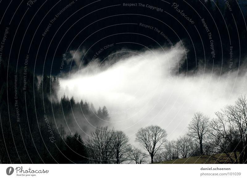 kein Kunstnebel Nebel Wolken schwarz weiß abstrakt Hintergrundbild Baum Herbst Schwarzwald Wald Winter Licht Vergänglichkeit Himmel Kontrast Berge u. Gebirge
