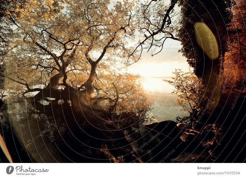 der Sonne entgegen Himmel Natur weiß Wasser Sommer Baum Blatt Landschaft schwarz Wald Umwelt gelb Wärme Frühling Küste