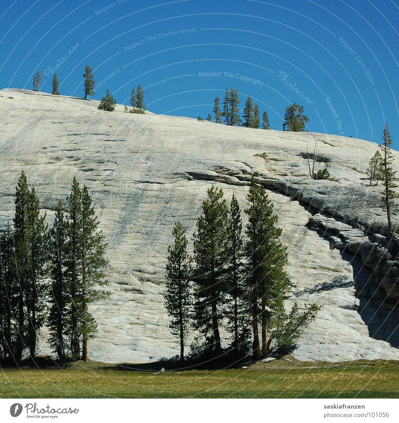 Yosemite I Yosemite NP Park Wiese grün Baum Nadelbaum Sommer Nationalpark Amerika Kalifornien USA Natur Landschaft Stein Felsen Berge u. Gebirge Himmel blau