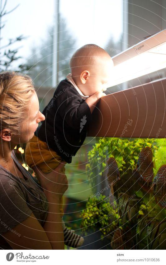 neugier Mensch Frau Kind Erwachsene Leben Lampe Zusammensein Familie & Verwandtschaft Wohnung Häusliches Leben Kindheit Baby beobachten Neugier Fisch festhalten