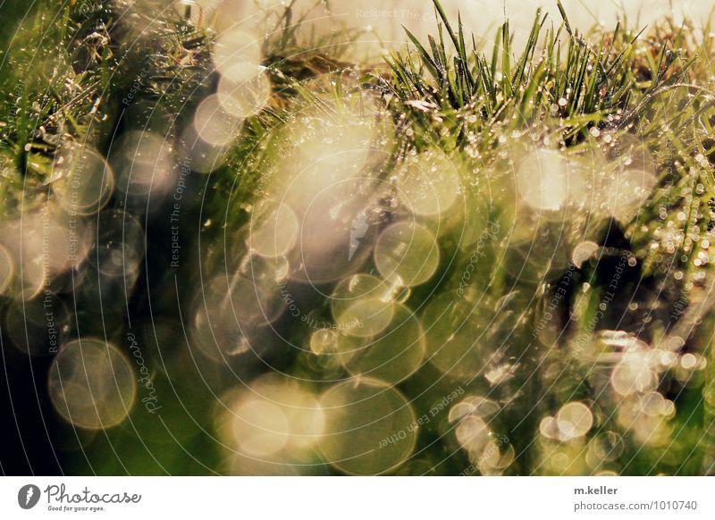 Wassertropfen im Gras Natur Erde Erholung glänzend genießen träumen Freude Zufriedenheit Euphorie ruhig Abenteuer Bewegung Freizeit & Hobby Gefühle nachhaltig