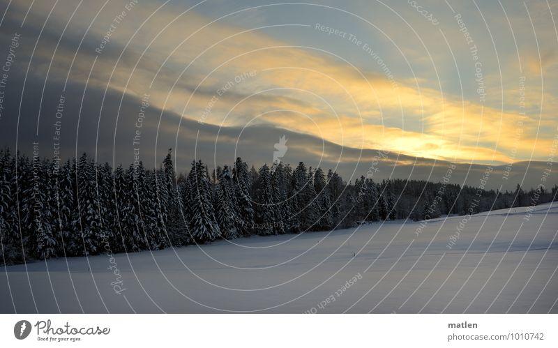 Hoffnungsschimmer Umwelt Natur Landschaft Pflanze Himmel Wolken Sonnenaufgang Sonnenuntergang Winter Wetter Schönes Wetter Eis Frost Schnee Baum Gras Feld Wald