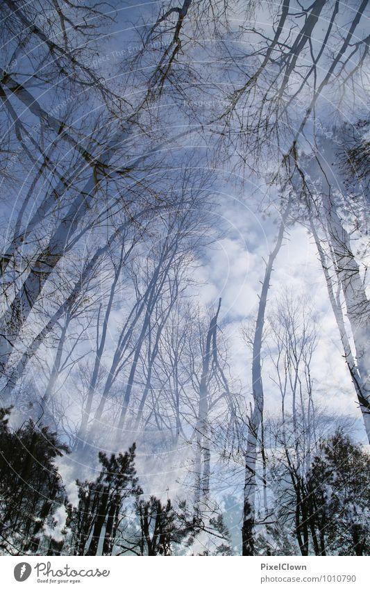 Hoch hinaus Himmel Natur Ferien & Urlaub & Reisen blau Pflanze Baum Blatt Landschaft Tier Wald Gefühle Blüte Frühling Stil grau Holz