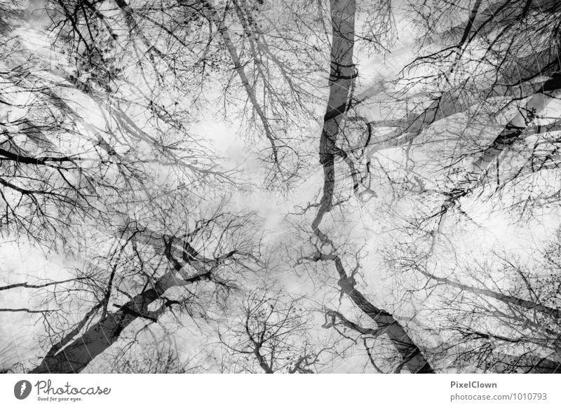 Blick gen Himmel Natur Pflanze Baum Einsamkeit Landschaft Tier schwarz Wald Traurigkeit Gefühle Holz außergewöhnlich Stimmung träumen Wachstum Design