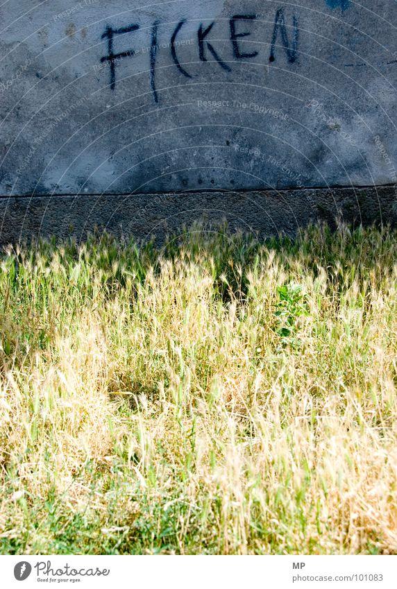JETZT! ALLE! SOFORT! Freude Haus Ernährung Wand Gras Sex dreckig laufen Beton Verkehr kaputt Kultur Getreide entdecken blasen Fleck