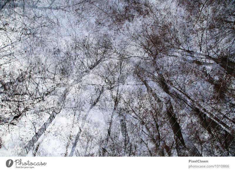 Wald Himmel Natur Ferien & Urlaub & Reisen blau Pflanze weiß Baum Landschaft Blatt dunkel schwarz Umwelt außergewöhnlich Kunst Stimmung