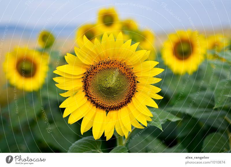 Natur Pflanze schön Blume Blüte Zufriedenheit Wellness Schwerpunkt