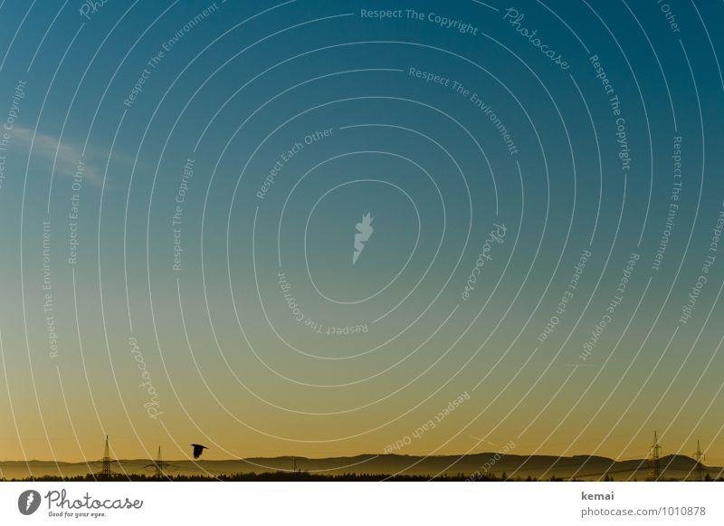 Ein früher Vogel Umwelt Natur Landschaft Himmel Wolkenloser Himmel Sonnenaufgang Sonnenuntergang Sonnenlicht Herbst Schönes Wetter Hügel Berge u. Gebirge 1 Tier