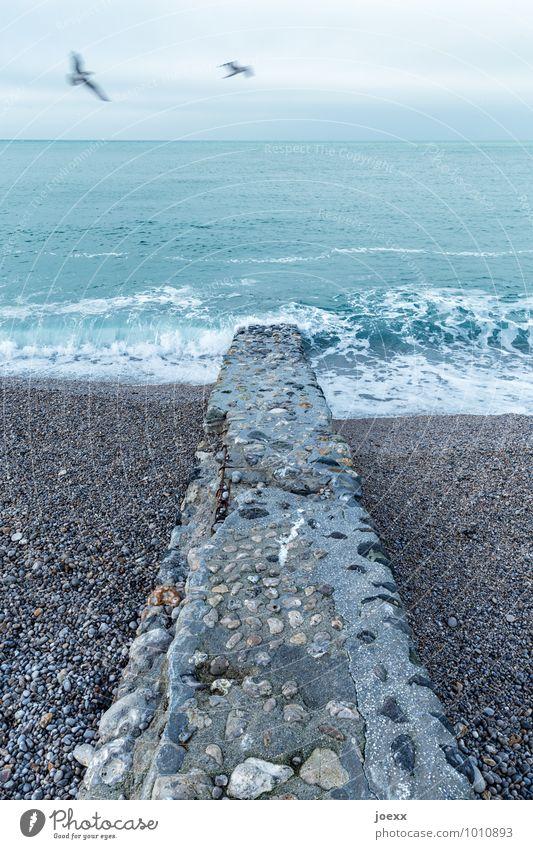 Eine Million Erinnerungen Urelemente Wasser Himmel Wolken Horizont schlechtes Wetter Wind Wellen Küste Strand Meer Mauer Wand Vogel Möwe 2 Tier Stein Beton