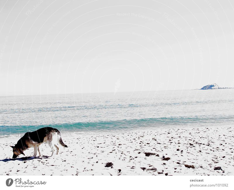 is anybody out there?? Strand Island Küste dog Sand water desert tread ocean dig walk searching gray cold empty contrast horizon