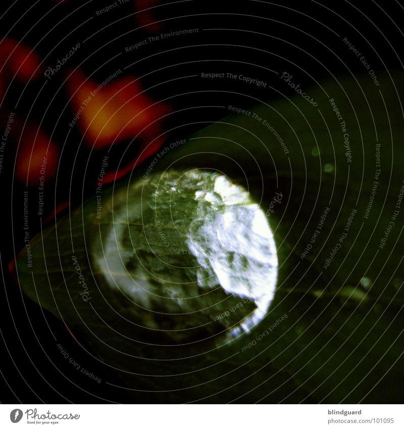 Planet Waterdrop nass Blatt rot grün Reflexion & Spiegelung dunkel glänzend Gefäße Makroaufnahme groß klein Nahaufnahme Wasser wet water Wassertropfen leaf dark