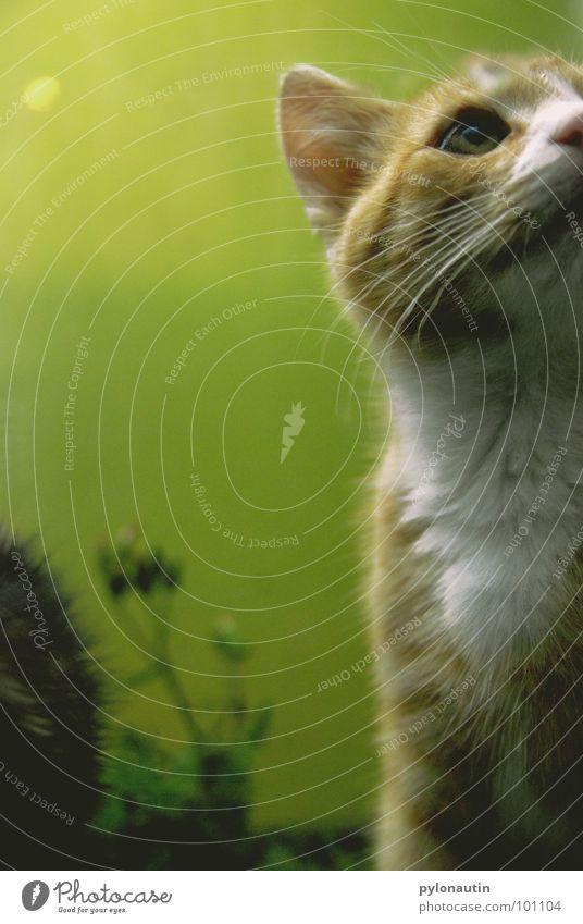 Grün hinter den Ohren grün Katze Sessel Tier Fell Pflanze weiß Säugetier Garten D80 Nikon orange Statue kleine Katze