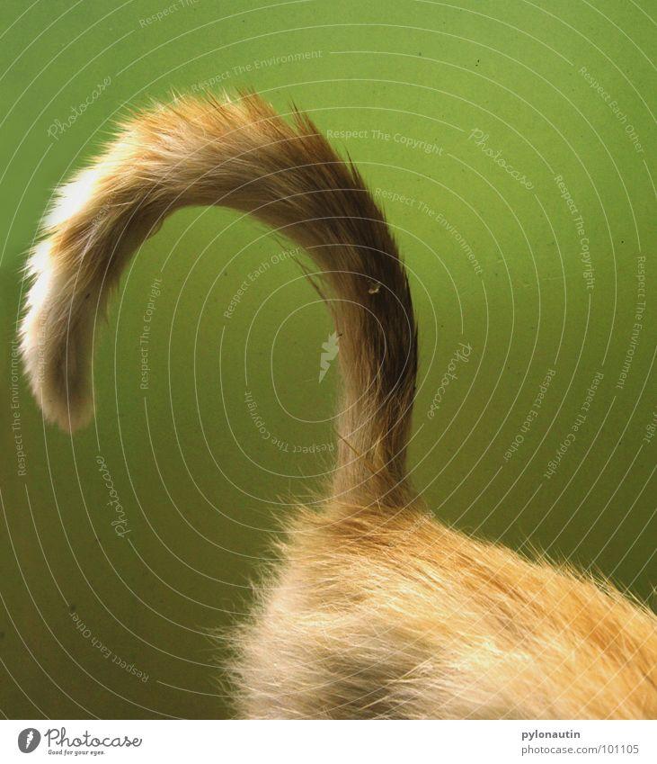 Katze begrünt weiß grün Pflanze Tier Garten Haare & Frisuren Katze orange Fell Statue Säugetier Schwanz Sessel