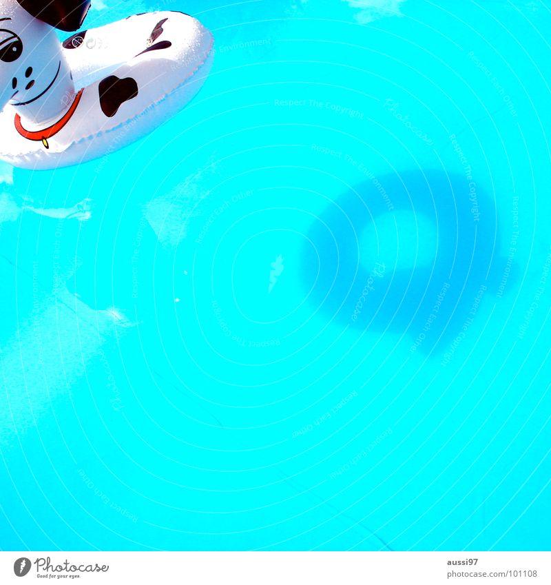 Schattenhund Wasser Ferien & Urlaub & Reisen Sommer Strand Freude Spielen Sand Kindheit Schwimmen & Baden Freizeit & Hobby Schwimmbad Im Wasser treiben