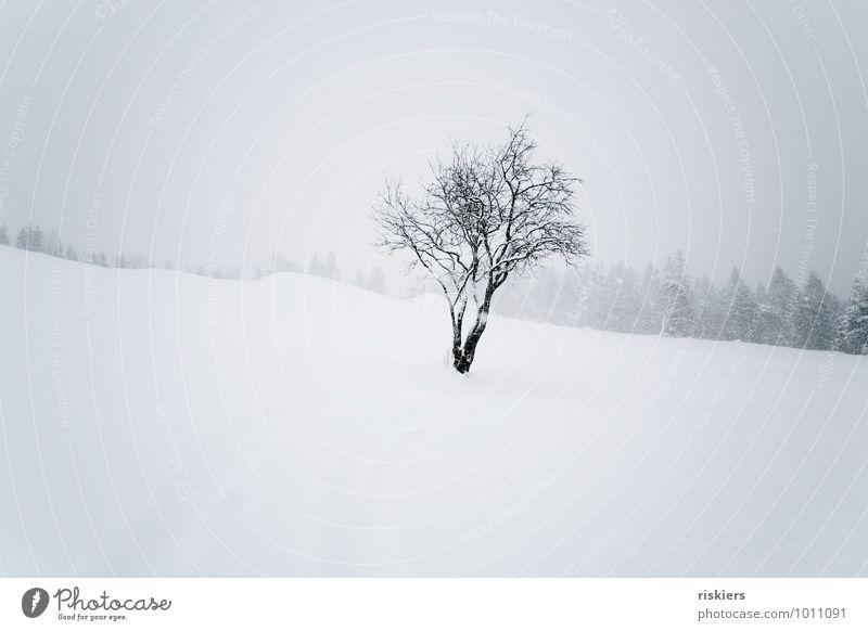 silence Natur Pflanze Baum Einsamkeit Landschaft ruhig Winter kalt Umwelt Schnee Schneefall Wetter Idylle elegant Kraft einzigartig