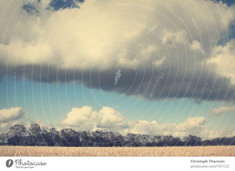 Damals war der Himmel noch blau Kornfeld Weizen Gerste Roggen Feld Baum Sträucher Horizont Umwelt Natur springen Sommer Wolken schlechtes Wetter Regen