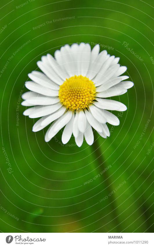 detail of a white daisy Natur Pflanze grün weiß Blume Landschaft ruhig Umwelt Gras Blüte Garten Park Wachstum frisch planen Botanik