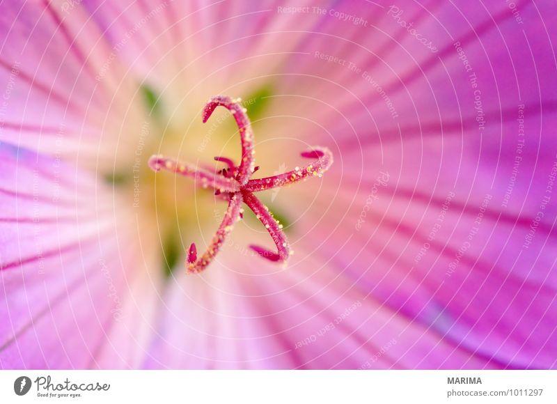 detail of a rose flower Natur Pflanze Blume Landschaft ruhig Umwelt Blüte Garten rosa Park Wachstum frisch planen Botanik organisch