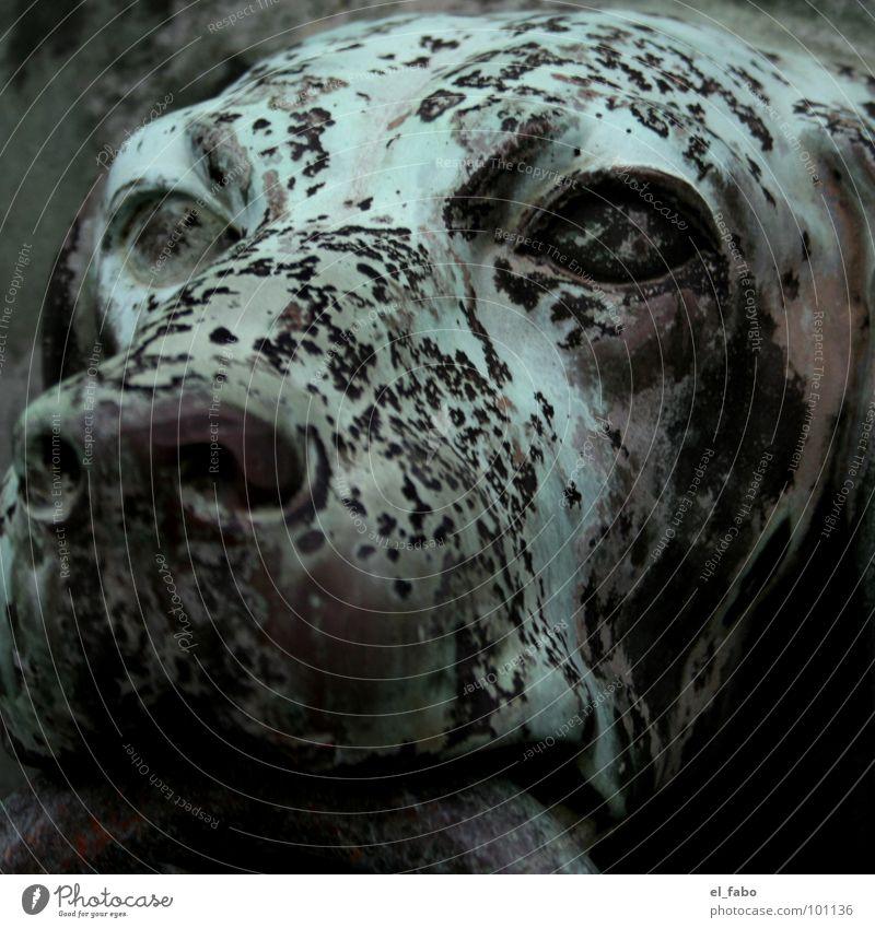 hund vorm tor Hund Eisen Bronze grün Schnauze historisch wauzi Metall Tor Tür Fleck Kreis Auge Türklopfer Detailaufnahme Nahaufnahme Menschenleer verwittert