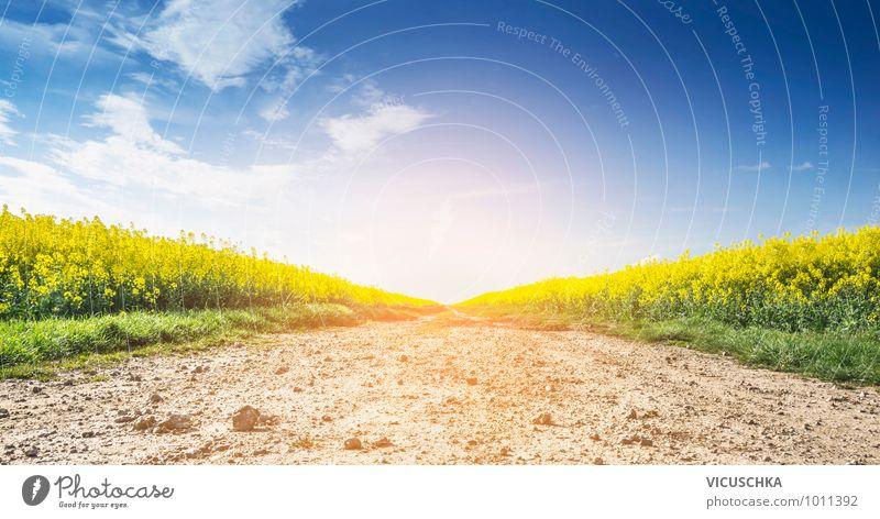 Weg zwischen Rapsfelder und blauer Himmel Lifestyle Design Natur Landschaft Pflanze Sonne Sonnenaufgang Sonnenuntergang Sonnenlicht Frühling Sommer