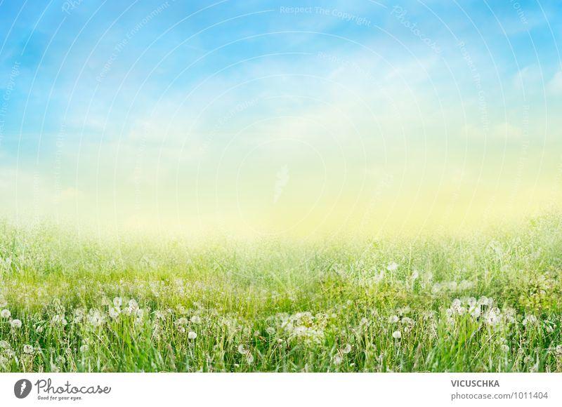Wiese mit weißen Lowenzahn Blumen Design Garten Umwelt Natur Himmel Frühling Sommer Schönes Wetter Park Feld springen Löwenzahn Sommertag Wärme Gras Landschaft