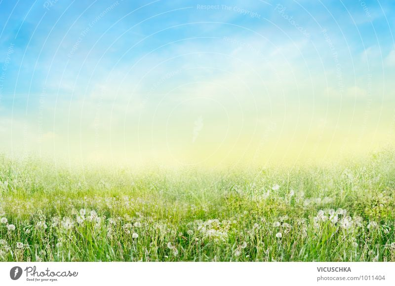 Wiese mit weißen Lowenzahn Blumen Himmel Natur weiß Sommer Blume Landschaft ruhig Umwelt Wärme Wiese Gras Frühling Hintergrundbild Garten springen Park