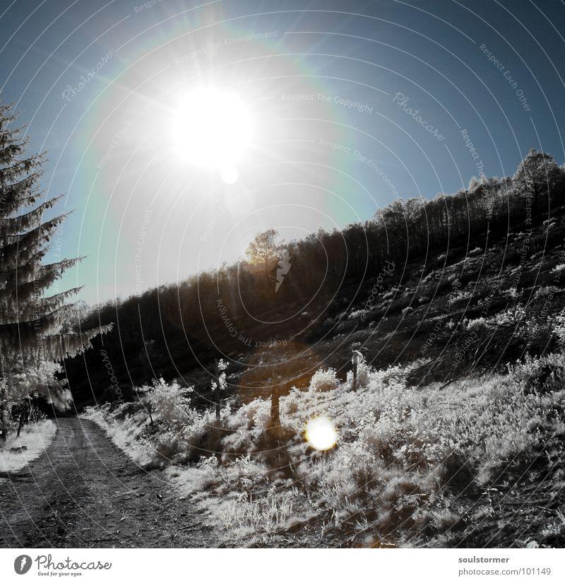Gegenlicht Himmel weiß Baum Sonne blau rot schwarz Wolken Wald Schnee Wiese Gras träumen Wege & Pfade Denken Beleuchtung