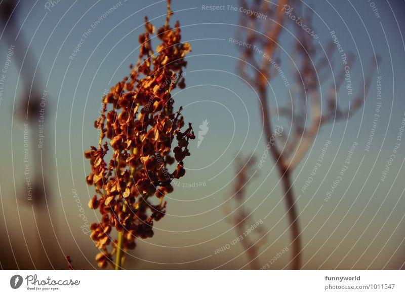 behangen Pflanze Blume Gras Sträucher Grünpflanze Wildpflanze außergewöhnlich Himmel nah Blüte verträumt Garten Romantik rot gelb Farbfoto Außenaufnahme