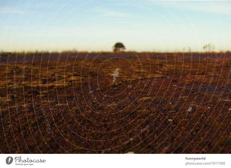 In der Mitte steht ein Baum Himmel Natur Pflanze Einsamkeit Landschaft Ferne Umwelt Wege & Pfade braun Horizont Erde Perspektive Ewigkeit langhaarig Symmetrie