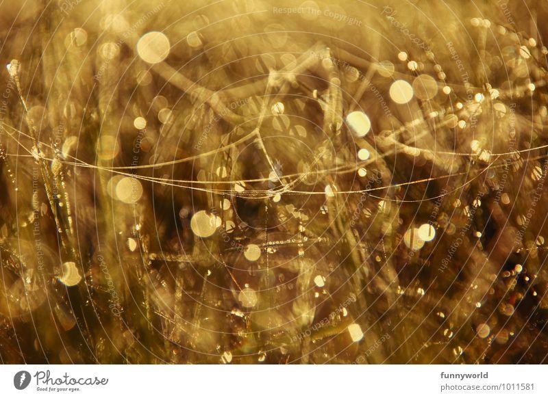 Gold Natur Pflanze Wärme Wiese Gras Glück Hintergrundbild glänzend träumen Regen gold Kreis Lebensfreude Tropfen geheimnisvoll Kitsch