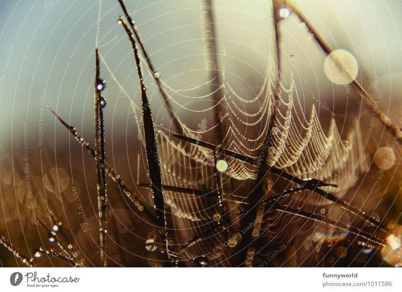 Tröpfchengespinst Gras glänzend Design einzigartig komplex Kunst Leichtigkeit Leistung Netzwerk Symmetrie Spinnennetz Tau Wassertropfen aufgereiht Natur schön