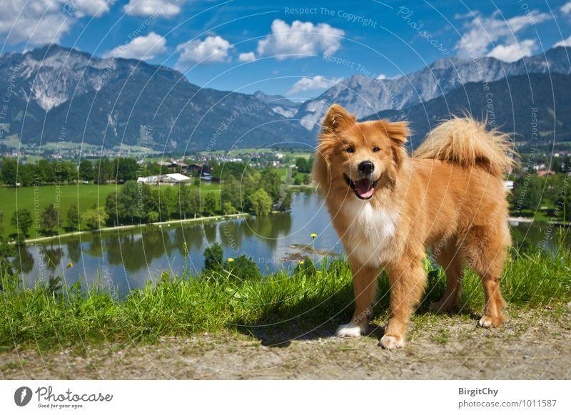 Ritzensee, Saalfelden Natur Landschaft Wasser Himmel Wolken Sommer Schönes Wetter Tier Haustier Hund 1 genießen Blick Ferien & Urlaub & Reisen Farbfoto