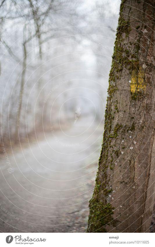 still. Umwelt Natur Landschaft Winter Eis Frost Schnee Baum Wald nachhaltig natürlich Baumstamm Farbfoto Außenaufnahme Nahaufnahme Menschenleer Tag