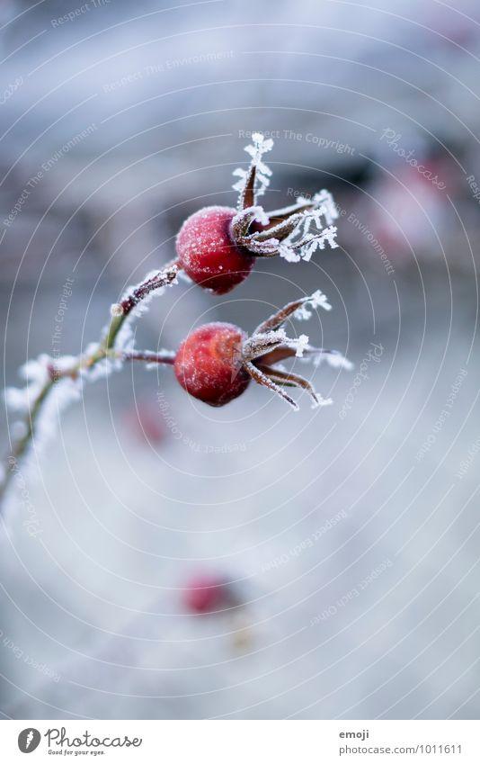 Hagebutte Natur blau Pflanze rot Blume Landschaft Winter kalt Umwelt Schnee natürlich Eis Frost Hagebutten