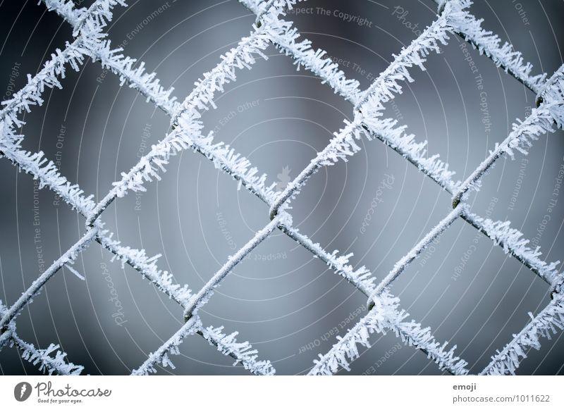 X Umwelt Natur Winter Eis Frost Schnee Eiskristall kalt blau grau weiß Zaun Farbfoto Gedeckte Farben Außenaufnahme Detailaufnahme Muster Strukturen & Formen