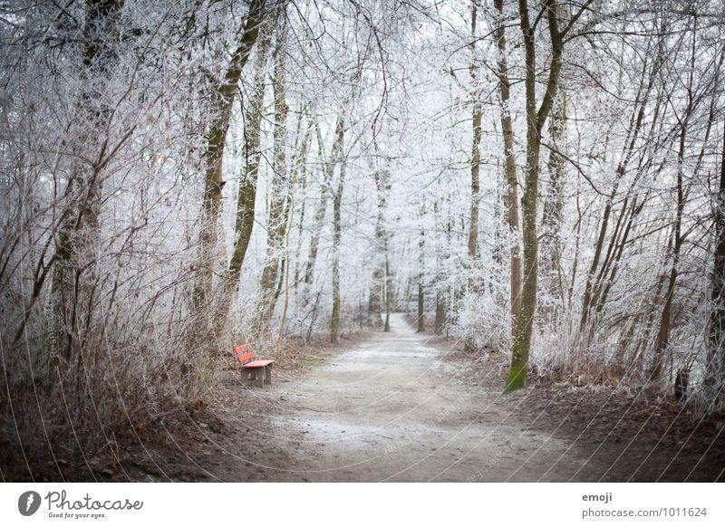 Frost-Wald Umwelt Natur Landschaft Winter Eis Baum außergewöhnlich kalt natürlich weiß Bank Farbfoto Außenaufnahme Menschenleer Tag Schwache Tiefenschärfe